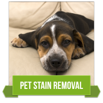 Pet Odor Removal Springfield Missouri